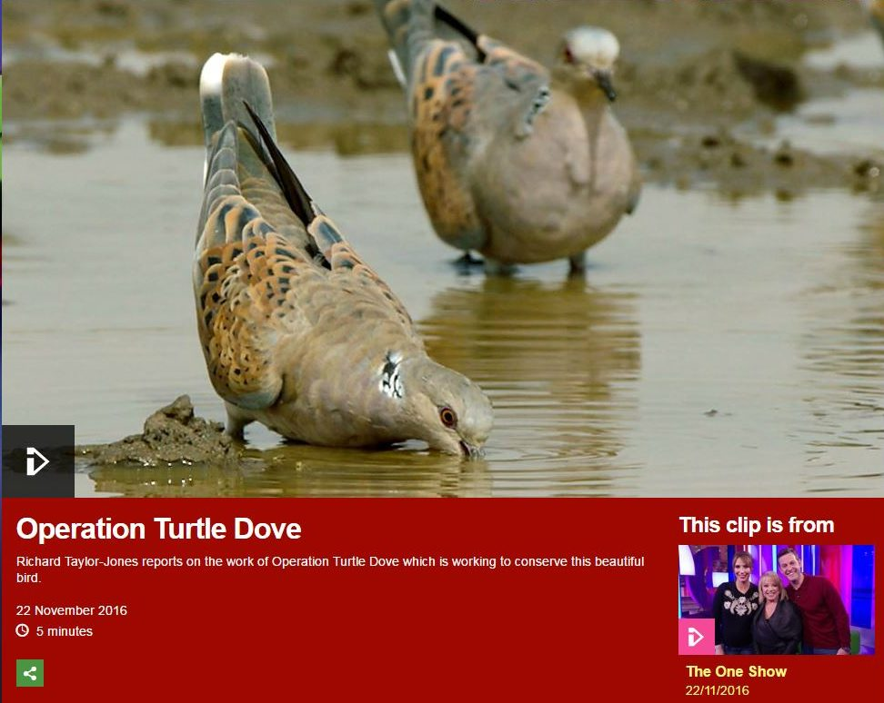 Operation Turtle Dove on The One Show -22-11-16