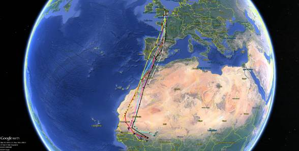 Routes taken by tagged birds in 2016 - RSPB Science - satellite tags