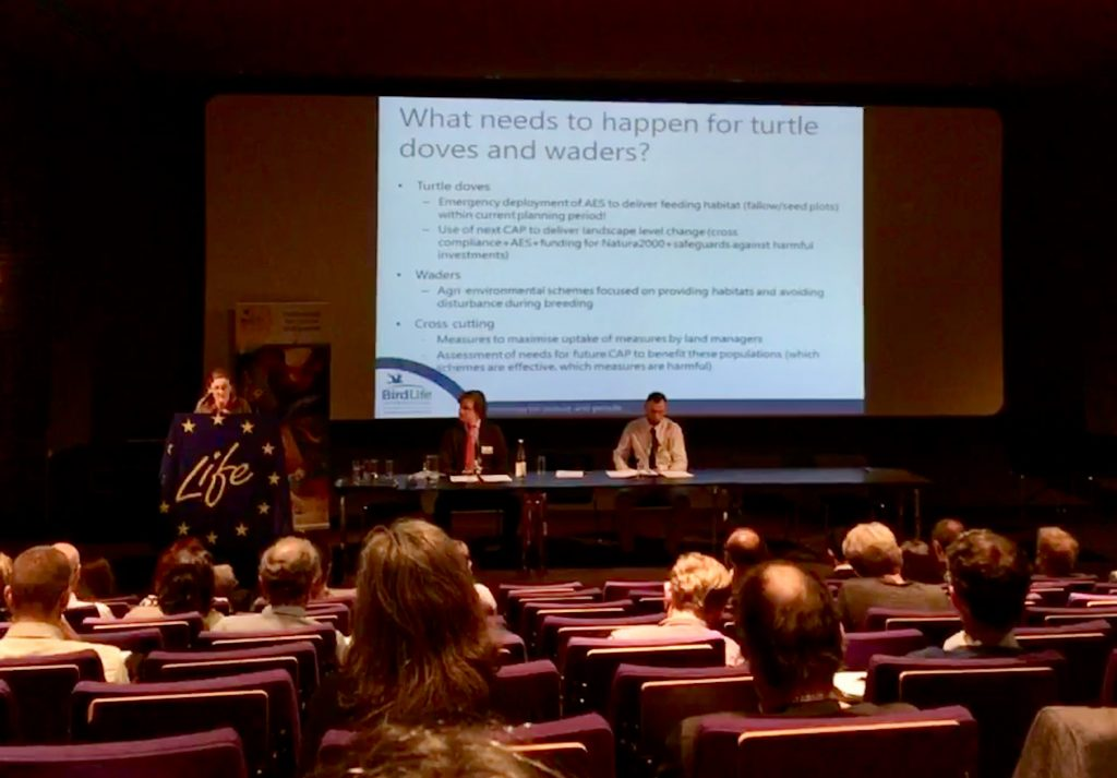 Harriet Bradley from Birdlife talks about what needs to happen for turtle doves