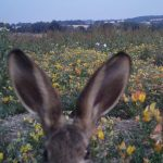 Hare - Nick Oliver