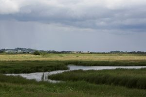 RSPB Old Hall Marshes - Kieren Alexander