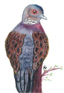 Turtle Dove - Ali Bennett