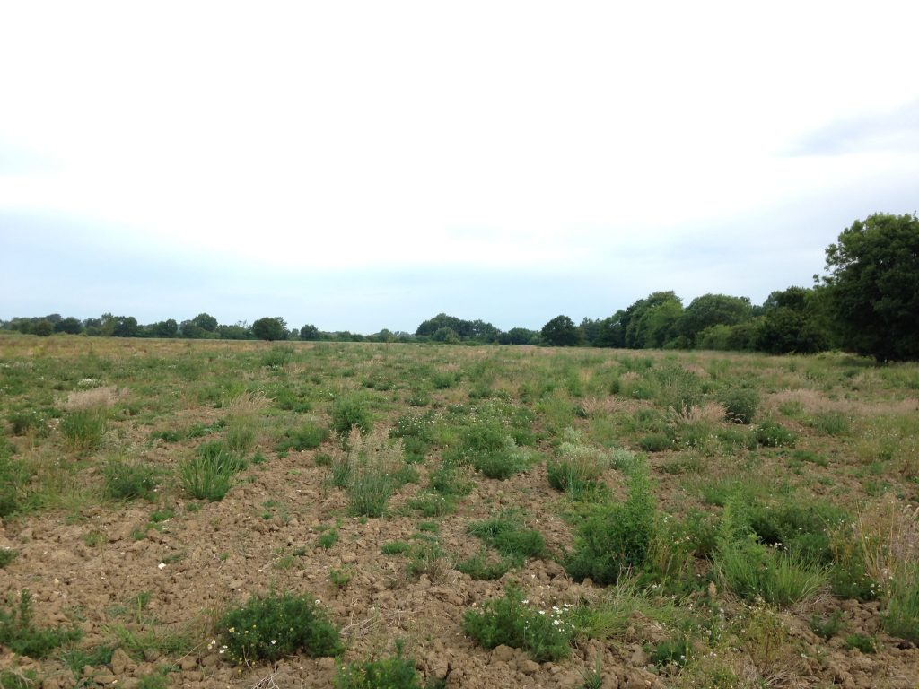 Photo: Suitable feeding habitat for turtle doves in England. They need open ground for feeding on seeds and thick, dense scrub and hedgerows for nesting. Credit: Tony Morris.