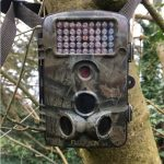 camera trap on tree