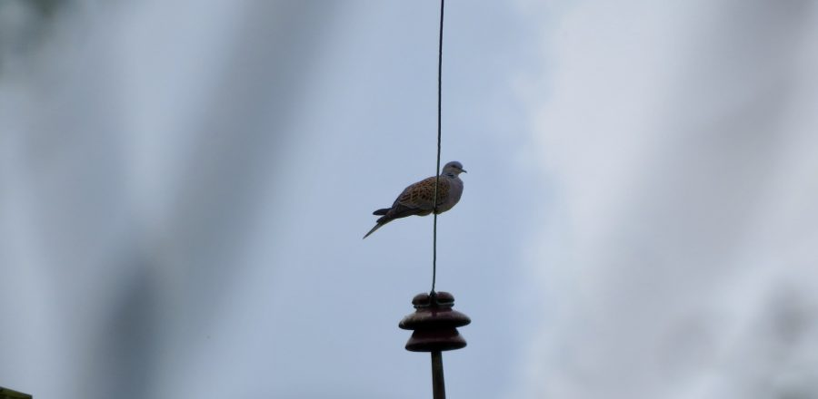 Home - Operation Turtle Dove
