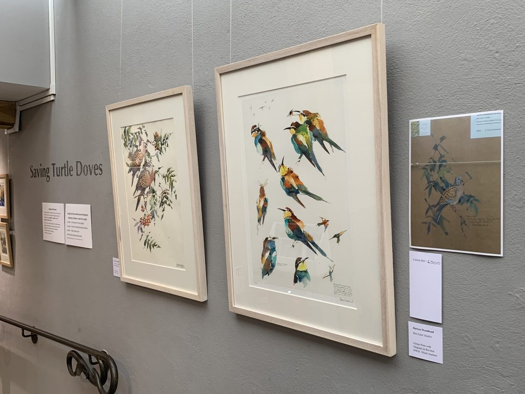 Image: Darren Woodhead's two exhibition pieces. 'Turtle Doves among Rowan Shadows' on the left and 'Bee-eater Studies' on the right. The bee-eater painting features a turtle dove on the back and is included in the silent auction. Credit: Jos Ashpole.