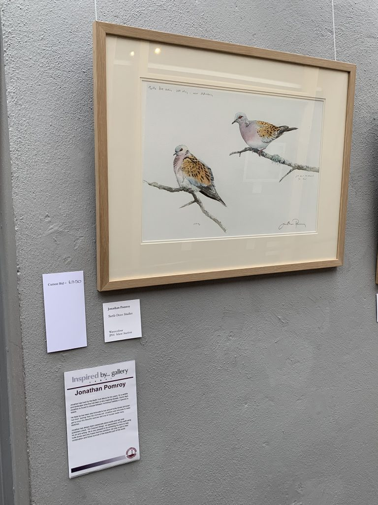 Image: Jonathan Pomroy's 'Turtle Dove Studies' in watercolour. Credit: Jos Ashpole.