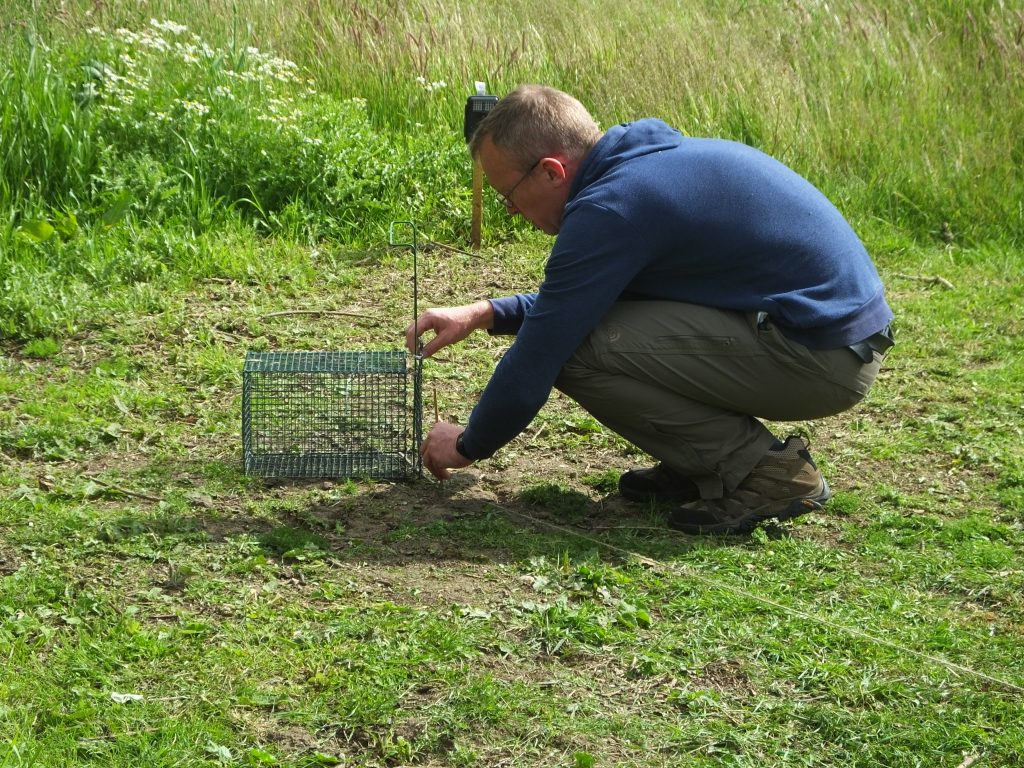 Photo: Chris Orsman prepares the equipment for capturing turtle doves for fitting with GPS trackers. Credit: John Mallord.