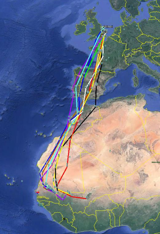 Photo: Map showing the migratory tracks of 10 turtle doves tagged in East Anglia in Summer 2019.